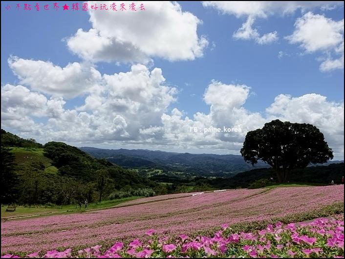 木更津母親牧場 (84).JPG