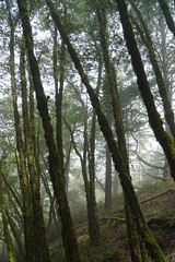 Mount Tamalpais: Rock Spring to Stinson Beach Hike (24) (Planet Q) Tags: mttam marinheadlands