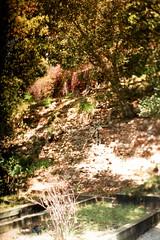Exa 1C Original Busch Gardens 4 () Tags: original busch gardens pasadena los angeles california history heritage theme park film tour mill waterwheel 1920s adolphus public private abandoned exa east germany ddr gdr slr m42 classic retro vintage 35mm camera