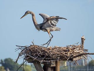 Occupied Nest