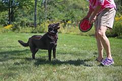 1483 (Jean Arf) Tags: trumansburg ny newyork summer 2016 annie dog play fetch joanne disc frisbee