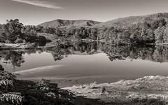 Vladimir Ashkenazy on Ansel Adams.... (AJFpicturestore) Tags: cumbria lakedistrict lakes tarnhows october lake tarn autumn monochrome blackwhite alanfoster vladimirashkenazy anseladams