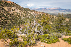 View From Hat Shop Trail (Serendigity) Tags: brycecanyonnationalpark deadwood outdoors usa unitedstates landscape utah nature