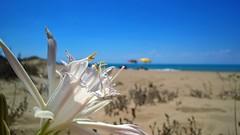 Sicilia (cortomaltese) Tags: sicilia torresalsa spiaggia beach sicily italy italia trapani mare sea seaside