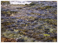 Mare (fr@nco ... 'ntraficatu friscu! (=indaffarato)) Tags: italia italy sicilia sicily marzamemi