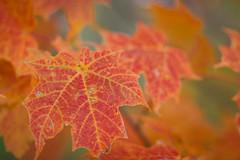 Autumn #22 (wingardium leviosa.) Tags: odc ourdailychallenge