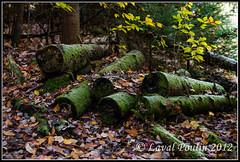 Moisissure (Loupin101) Tags: temp lieux autre montwright promenadesetrandonnées montwright13octobre2012