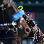 Harness Racing at Colonial Downs thumbnail