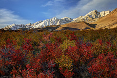 The Crimson Patch (DM Weber) Tags: red snow mountains crimson canon landscape sierra snowcapped foliage patch eastern eos5dmk2 psa148 dmweber