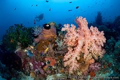 Coral reef (Felipe Barrio) Tags: underwater reef papuanewguinea oro alotau milnebay