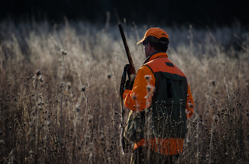 Pheasant hunting by m01229, on Flickr