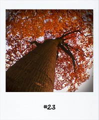 "#DailyPolaroid of 21-10-12 #23 • <a style=""font-size:0.8em;"" href=""http://www.flickr.com/photos/47939785@N05/8132234776/"" target=""_blank"">View on Flickr</a>"