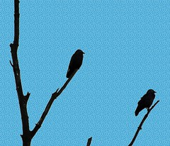 Snowy Crows (tubblesnap) Tags: snow tree perch layer crow rook