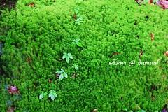 PhamonVillage-DoiInthanon-ChaengMai-Trip_By-P r i m t a a_E10886166-052