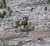 Texas Whitetail Hunt & Exotics - Kerrville 24