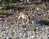 Texas Whitetail Hunt & Exotics - Kerrville 16