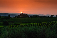 "Croatian Dawn over Vineyard • <a style=""font-size:0.8em;"" href=""https://www.flickr.com/photos/21540187@N07/8142959912/"" target=""_blank"">View on Flickr</a>"