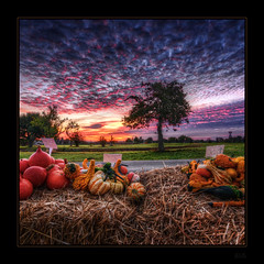 Survivors... (Kemoauc) Tags: morning halloween sunrise pumpkin nikon hdr topaz photomatix d300s kemoauc