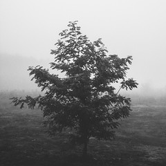 mist (Welcu) Tags: park mist tree fog blackwhite day wroclaw