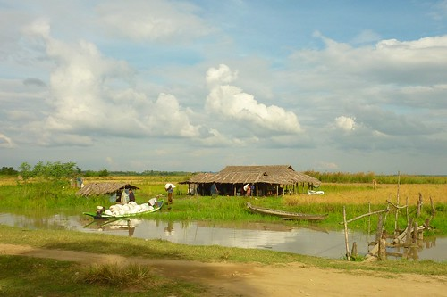 Wetland, Ayeyarwadi delta in Myanmar. Photo by Eric Baran, 2012.