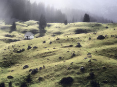 Radiša Živković - Shelter (Radisa Zivkovic) Tags: light sunlight house yellow forest landscape scenery europe shadows olympus highland pasture montenegro crnagora durmitor