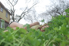 """""""A Little Piece of Oasis"""" (Sunset Dream Photography) Tags: trees houses windows sleeping sky selfportrait blur green nature buildings outdoors happy blurry focus peace little branches peaceful ground oasis rest resting piece clover lay gir laying"""