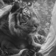 """The Guardian"" (JanneO) Tags: baby photomanipulation tiger dream manipulation dreams janneo"