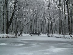 ...frost (mariuszj8) Tags: bridge las trees winter snow ice nature forest pond poland pozna wilda supershot dbina