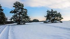 P1180465 (Tobias Keller) Tags: 169 bavaria bayern deutschland donauries germany huisheim schwaben swabia winter geocountry camera:make=panasonic exif:model=dmcg2 exif:isospeed=100 geostate geocity exif:focallength=18mm camera:model=dmcg2 geo:lat=48819530555555 exif:lens=lumixgvario1442f3556 geolocation geo:lon=10716977777778 exif:aperture=ƒ56 exif:make=panasonic panasonicdmcg2 lumixgvario1442f3556