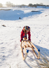 Girl pushing wooden sledge up a hill (dave hanlon) Tags: family winter holiday snow playing cold girl kids children fun outside outdoors vakantie lol dunes small dune sneeuw hill familie kinderen kind recreation lachen pulling moeder duinen pleasure awd lach exciting active sneeuwpret sledge sledging slee muts pushing kou pret koud gezin duin spelen samen plezier relaxen uitrusten vakantiegevoel gelukkig laarzen geluk handschoen vreugde duingebied ontspanning recreatie amsterdamsewaterleidingduinen dezilk ontspannen sleeen sleetje blijheid samenspelen samenzijn excitiment jongegezin