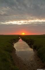 Sunset @ Texel. #slufter #texel #texels #texelpics #nature #natuur #foto #photo #justin #sinner #pictures #reservate #holland #wadden #eiland #island #northholland #canon #sun #zon #sunset #Zonsondergang #water #clouds #mud #modder #gras #plant #stunning (JustinSinner.nl) Tags: sunset texel slufter texels texelpics nature natuur foto photo justin sinner pictures reservate holland wadden eiland island northholland canon sun zon zonsondergang water clouds mud modder gras plant stunning