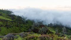 Kawah IJen Forest (Robert-Jan van der Vorm) Tags: banyuwangi regency east java indonesia caldera kawah ijen sulfur mining forest clouds