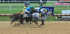 1st Race at Delaware Park (susanmbarlow) Tags: delawarepark equus horse thoroughbred racetrack delparkracing equidae racehorse equine delaware photograph equinephotography thoroughbredracing horseracing horserace