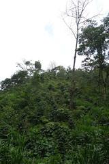 DSC01841 (rad!x) Tags: cuetzalan cuetzalandelprogreso mexico puebla pueblomagico reservaazul everyone vacation