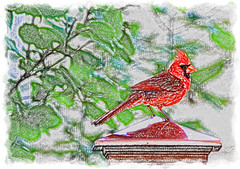 a little happiness (LotusMoon Photography) Tags: bird cardinal redbird male red coloredpencil photoshop photomanipulation photoart photopainting summer framed border garden annasheradon