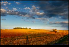 160723-9938-XM1.jpg (hopeless128) Tags: self shadow combineharvester fields sky eurotrip 2016 me france clouds saintangeau aquitainelimousinpoitoucharen aquitainelimousinpoitoucharentes fr