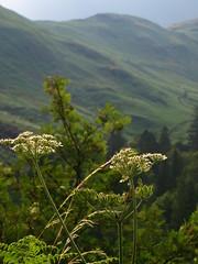 Les verts du Cumberland, cromlech de Castlerigg, Keswick, Allerdale district  Cumbria, Angleterre, Royaume-Uni. (byb64) Tags: castlerigg castleriggstonecircle keswick cumbria cumberland angleterre england inglaterra inghilterra grandebretagne greatbritain grossbritanien granbretana royaumeuni reinounido vereinigtesknigreich ue uk unitedkingdom europe eu europa campagne fields campo rural countryside lndlicheraum prs prairies campagna vert green verde muret mur paysage paisaje paesaggio landscape landschaft vue view vista veduta field