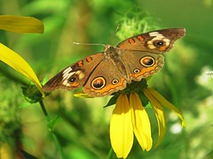 My favorite butterfly is the one who doesn't fly away. (kennethkonica) Tags: nature dog truck animalplanet animaleyes animal color outdoor butterfly wings marioncounty midwest america usa indiana indianapolis indy global random hoosier canonpowershot canon thebestshotoftheday beauty