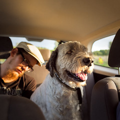 Atlas on the road (*hassedanne*) Tags: atlas eddie tired happy car goldenhour hss sliderssunday