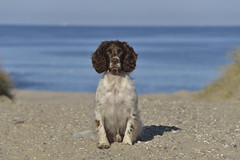 ZigZag at seaside (Flemming Andersen) Tags: seaside hund blue sand beach water zigzag dog