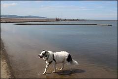 West Kirby Wirral 230816 (9) (Liz Callan) Tags: westkirby wirral sea seaside beach rocks boats ben bordercollie dogs sky water waves buildings lizcallan lizcallanphotography