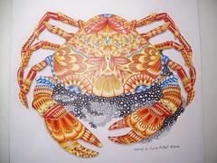 Crab (Lynne M. B.) Tags: coloringadults coloring coloringbook coloredpencils drawing art illustration tropicalworld milliemarotta crab