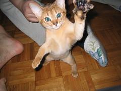 Ti prendo! (MaxPol67) Tags: grandi felini