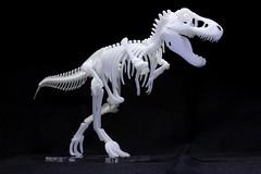 IMG_6879 (Barman76) Tags: bonelab trex tyrannosaur skeleton plastic laser cut