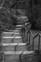 Lpcsk / Stairs (Gellrt-hegy) (bencze82) Tags: budapest hungary magyarorszg canon eos 700d tavasz spring voigtlnder apolanthar 90mm f35 slii lpcsk stairs gellrthegy