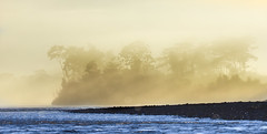 ..Ghost and rainforest --Fantmes et jungle..Madr de Dios (geolis06) Tags: geolis06 prou peru per amriquedusud southamerica romanu amazonie amazonia rainforest jungle fort forest madrededios manu parcnationaldeman mannationalpark 2016 pantiacollatour nikon nikond7200 sigma sigma150600mmf563dgoshsmcontemporary panorama