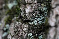 . (CarloAlessioCozzolino) Tags: monza monzaebrianza parcodimonza natura nature piante plants albero tree muschio moss
