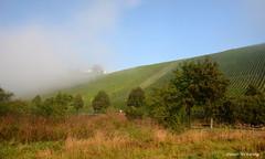 Der Nebel verzieht sich an der Vogelsburg (diwe39) Tags: untereisenheim weinberg vogelsburg nebel herbst2016