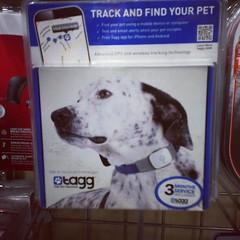 ปลอกคอหมาออนไลน์ สามารถติดตามทางมือถือ ว่าหมาอยู่ไหน เจ๋ง... ! #PomUS