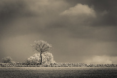 Spotlight Breaks A Horizon (Mabry Campbell) Tags: light shadow sky blackandwhite bw tree field clouds rural landscape photography photo skne spring europe sweden horizon may photograph 100 sverige scandinavia malm f28 malmo springtime 2012 200mm skane southernsweden southsweden ef200mmf28liiusm sec mabrycampbell may172012 tipofsweden 201205179474